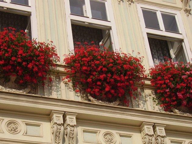 Nejlépe vyzdobené okno Danuše Neuschlové z Masarykova náměstí