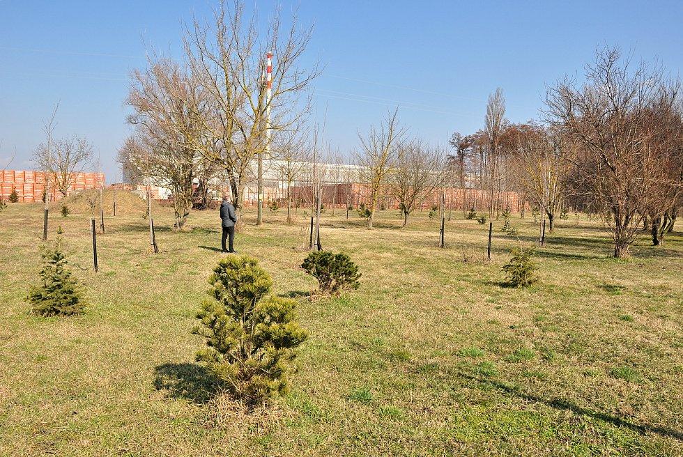 Výsadba zeleně v Hevlíně odhluční i cihlářskou výrobu