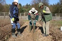 Pracovníci správy Národního parku Podyjí se vydali na dlouhou pouť za obnovou starých odrůd ovocných stromů.