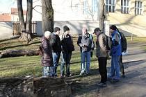 Odborníci z české inspekce životního prostředí u poraženého stromu, ve kterém zimovali netopýři