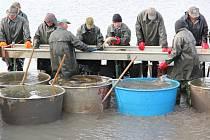 Výlov jaroslavického Zámeckého rybníka, který je nevětší na Znojemsku, odstartoval.