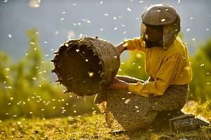 Film Země medu. Repro: Znojemská Beseda