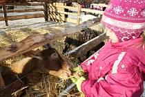 Vánoční trhy a opravdové peklo v Žandově.