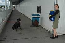 Pes uvázaný u bankomatu u Hypernovy