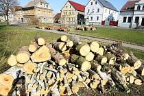 Za hrůzu označil Petr Moučka ze Stvolínek pokácení patnácti vzrostlých stromů.