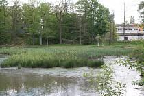 Bažinu zatím spíše připomíná Zámecký rybník v mimoňském parku. To by se mělo ještě letos změnit.