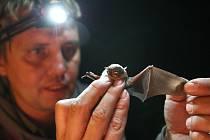 Na veřejnost čeká bohatý program s přednáškami o životě netopýrů a jejich ochraně.