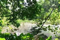 Bezmála čtyři miliony korun půjdou do obnovy přírodních lesních nádrží Lutovník a Knížecí v Ralsku.