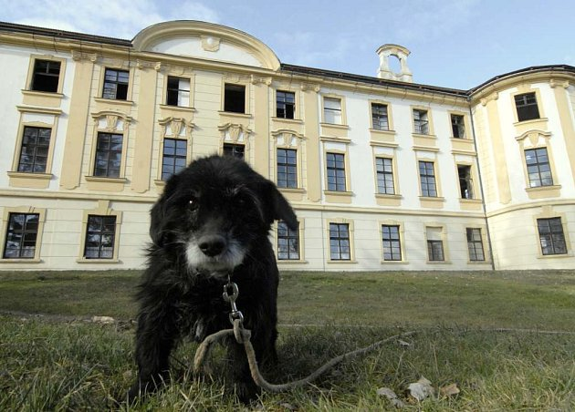V okolí zámku není kromě uvázaného psa v zámeckém parku vidět ani živáčka