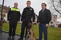 Osmnáctiměsíční belgický ovčák Ares Mapet je novou posilou městských strážníků v Novém Boru.