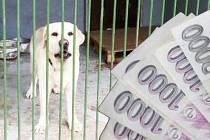 Zhruba pět stovek psů projde ročně útulkem v Dobranově u České Lípy. Podle zjištění Deníku inkasuje útulek ročně od měst regionu až milion korun.