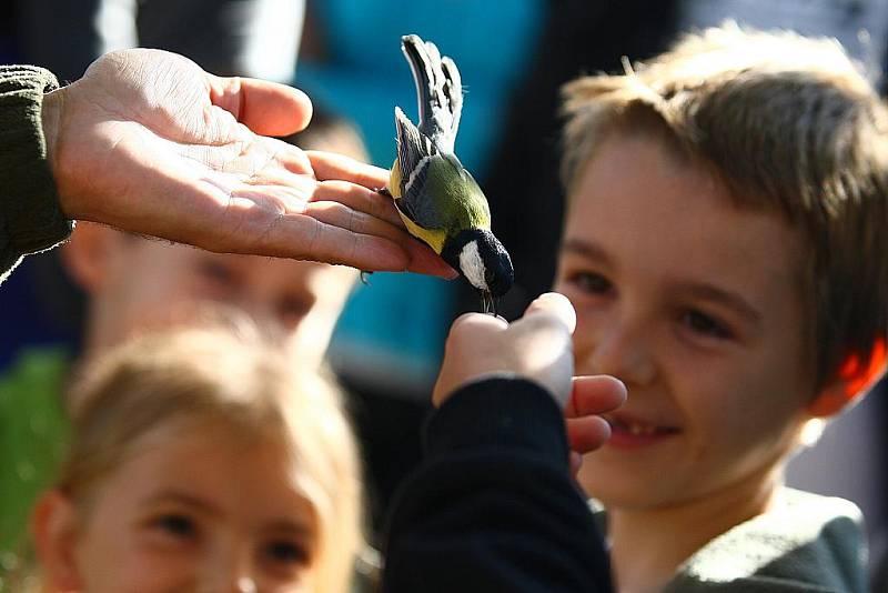 Festival připadá na první říjnový víkend, kdy partneři BirdLife International organizují v jednotlivých evropských zemích vycházky do přírody spojené s pozorováním ptáků a dalším doprovodným programem.