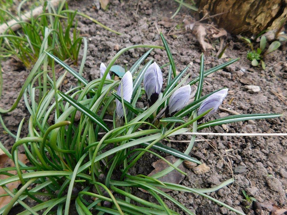 Jarní květinky.