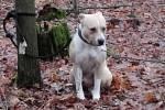 Policistům se podařilo zadržet 32letého muže, který loni ponechal svému osudu amerického stafordšírského teriéra. Psa uvázal v lese bez vody a jídla a odešel.