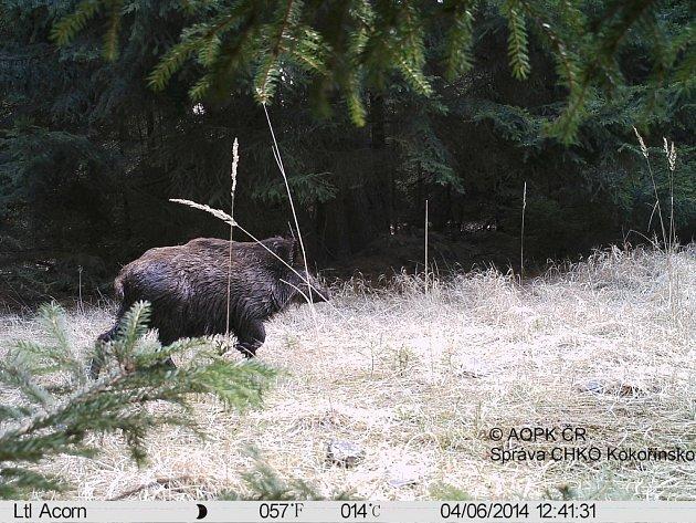 Fotopast pořídila jen vobdobí od 3.do 15.dubna celkem 40fotografií zvířat