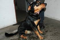 Letošní Vánoce trávilo v dobranovském útulku osmnáct psů. Všichni čekají na nový domov. Vyberete si?