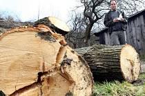 O kácení se už zajímá i inspekce životního prostředí z Liberce
