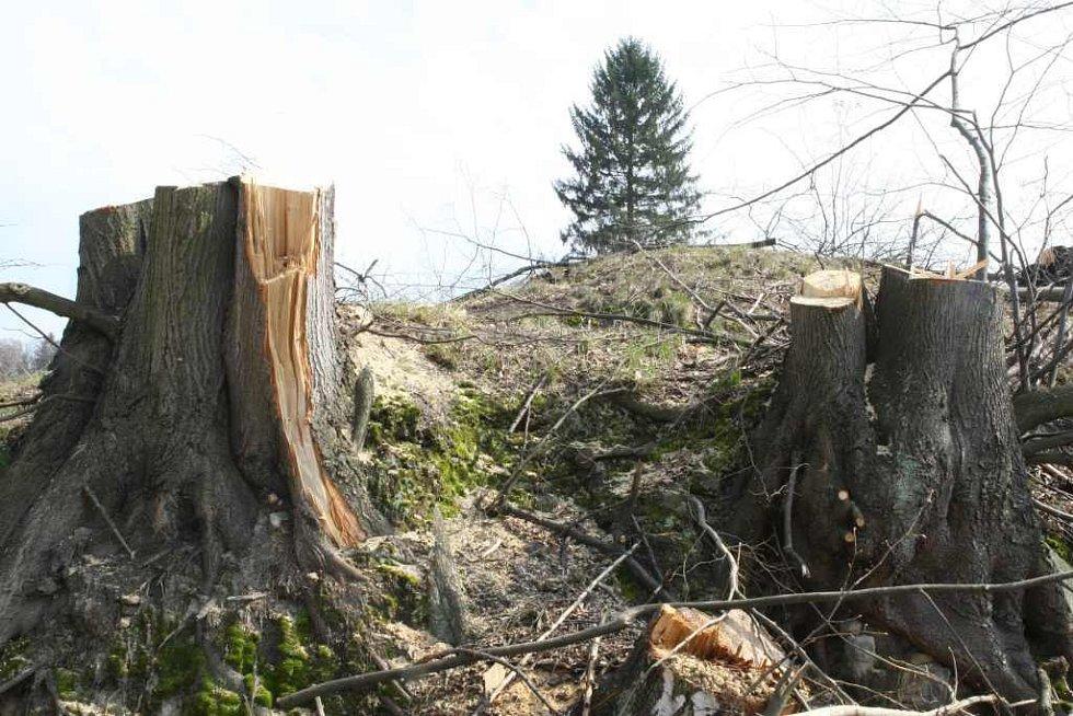 Vykácený les v Kunraticích u Cvikova