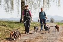 Ve Stráži pod Ralskem se konal orientační pochod se psy - Strážský dogtrek. Na trasu dlouhou 12 km se přihlásilo na dvě stovky účastníků.