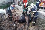 V obci Luka uvízl kůň v jímce. Pomocí upínacích popruhů a záchranné sítě se hasičům podařilo koně zvednout a dopravit zvíře do bezpečí.