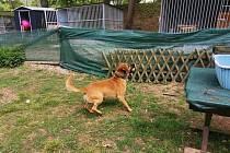 Pes, který našel nový domov.