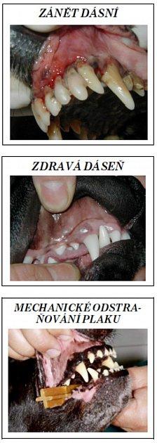 Majitelé by svým mazlíčkům měli čistit zuby každý den po nakrmení.