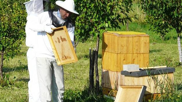 Na kritický úbytek včelstev chce mimo jiné upozornit expozice, kterou od pondělí 7. září nabídne veřejnosti Krajský úřad v Liberci.