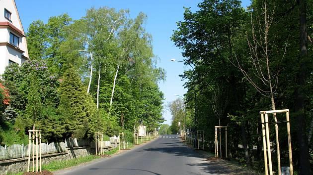 Nová_lipová_alej_ve_Valdštensjké_ulici_v_Doksech.