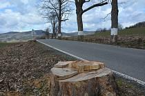 Krásná alej! Fotodokumentace z března 2020 ke kácení v aleji na silnici mezi Skalicí u České Lípy a Horním Pihelem.