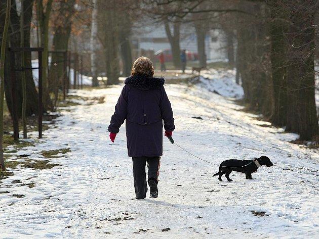 Uklízejte po svých čtyřnohých miláčcích, apelují Českolipané na majitele psů.