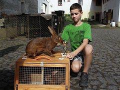 Mladý chovatel Filip Miřatský a jeden z jeho osmadvaceti králíků zaječích.