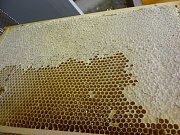 Vězeňská služba ve Stráži pod Ralskem má od loňského roku čtyři úly. O včely se stará celkem 12 vězňů v rámci vzdělávání.