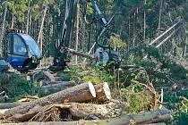 Lesníci likvidují škody po kalamitě.