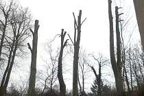 Stromy podnikatel poškodil neodborným ořezem.
