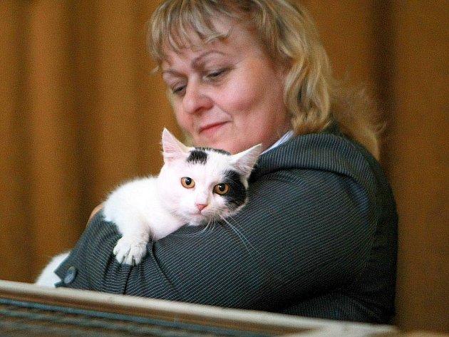 Útulek pro kočky Bona uspořádal umisťovací výstavu.