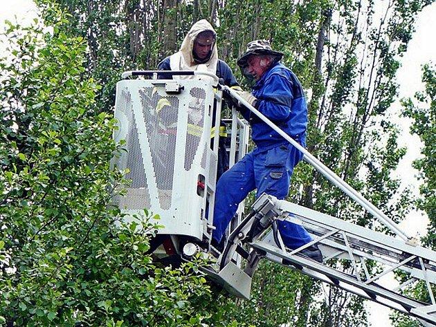 Dramatické chvíle prožívali nejen lidé, kteří přihlíželi odstraňování včelího roje, ale i včelař Josef Pelda.