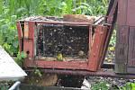 Včelí úl zasáhl blesk.