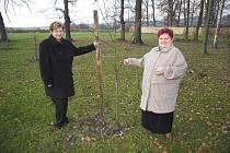 Už v roce 2006 ukazovali starostka a místostarostka Zákup ja provádí náhradní výsadbu