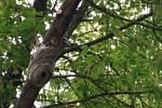 """Ke stavbě """"obydlí"""" vosy zvolily ničím nechráněnou větev."""
