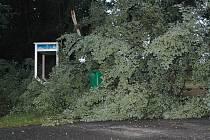 Během čtvrteční bouřky popadaly na Českolipsku desítky stromů.