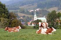 Ekofarma v Horní Polici přešla na ekologické zemědělství v roce 2002. Kromě jiného chová několik stovek kusů dobytka v bio kvalitě.