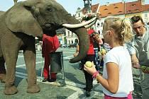 Cirkusoví sloni vyrazili v úterý odpoledne na českolipské náměstí, kde byli v obležení kolemjdoucích.