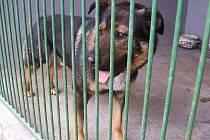 V posledních třech letech bylo městem do útulku v Dobranově předáno průměrně 160 psů za rok.