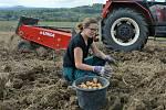 Žáci z oboru zemědělec-farmář českolipského středního odborného učiliště sklízí úrodu brambor na poli, které škola obhospodařuje ve Staré Lípě