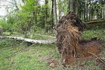 Řádění vichřice nejvíce odnesla oblast mezi Horní Světlou a Novou Hutí, kde lesníci přišli podle prvních odhadů o padesát tisíc kubíků dřeva. Stromy, které se v poryvech silného větru lámaly jako sirky, poškodily na několika místech i majetek lidí v obci