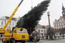 V Novém Boru stínil, tak nyní coby symbol Vánoc zdobí náměstí v České Lípě. Šestnáctimetrový smrk se dnes blýskne prvními ozdobami.