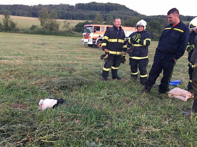 Čápa odchytli hasiči ze Zákup.