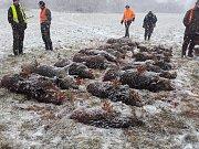 Myslivecký spolek v prosinci provedl v okolí Holého vrchu a ČOV dvě leče, při kterých se jim podařilo odlovit 18 kusů prasat. Uniknout se podařilo jen třem selatům, která využila krytí v rákosí.