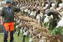 Součástí Lesnického dne bude i přehlídka loveckých trofejí.