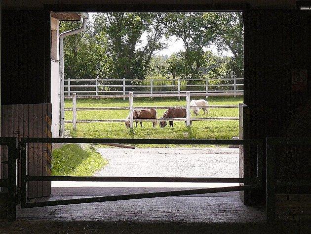 V dobách největší slávy v 70. a 80. letech měl hřebčín až 26 koní v tréninku.